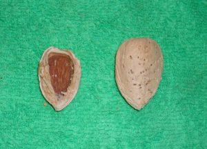 amêndoa - donadio2