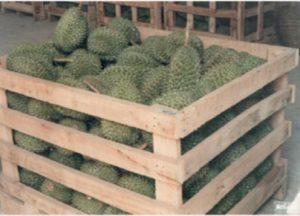 durian donadio 2
