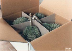 durian donadio 3