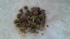 castanhafrutos