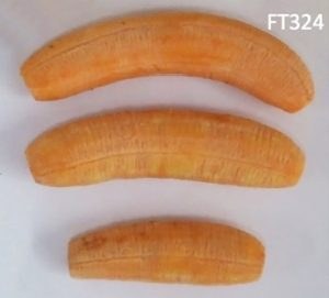banana-ft324