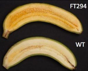 bananaft294